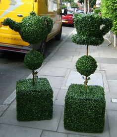 Topiary teapot and teacup on its way to the National Gallery's Tea Room.