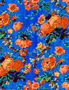pretty orange flowers with a beautiful cobalt background