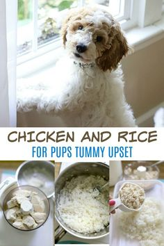 Puppies can easily get tummy upset by eating things they shouldn't. A bland diet of chicken and rice recommended by veterinarians is a first step to help dogs recover from diarrhea and or vomiting. Easy recipe you can make at home. Chicken And Rice Recipe For Dogs, Boiled Chicken And Rice, Chicken For Dogs, Canned Chicken, How To Cook Chicken, Dog Upset Stomach Remedies, Baby Food Recipes, Dog Food Recipes, Healthy Recipes