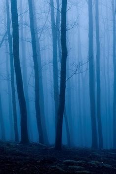 blue aesthetic Deep in a Blue Forest - Blue Aesthetic Dark, Nature Aesthetic, Aesthetic Colors, Aesthetic Pictures, Photo Wall Collage, Picture Wall, Images Murales, Blue Forest, Blue Hour