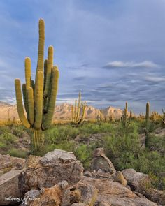 "Tucson   AZ....my home state ""I'm your Huckleberry""----tombstone..."