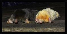 albino animal photos - Google Search