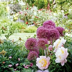 Mingle bulbs among perennials to help hide the bulbs' foliage as it fades. For example, peonies and perennial geraniums do a great job of covering allium foliage