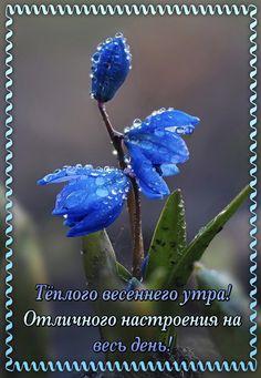 Свежие Цветы, Весенние Цветы, Цветочное Искусство, Сила Цветов, Фиолетовые Цветы, Красивые Цветы, Синий Сад, Синие Цветы, Морские Пейзажи