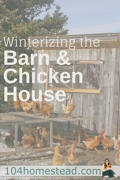 Its getting chilly with winter on the way and it's time to start thinking about winterizing the chicken house and barn. Here are great tips to get you started.::