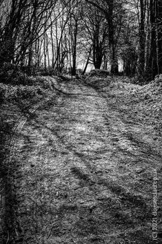 I took this wondering where it went. The answer is a mystery, but a beautiful mystery. #dorset #blackandwhite #monochrome #monochromatic #blackandwhitephotography #photography #photooftheday Black And White Photography, The Funny, Monochrome, Mystery, Comedy, Creativity, Dads, Adventure, Outdoor