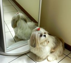 This dog reminds me of Molly, my shih tzu, who died during delivery 6 years ago.. her child couldn't be saved also.. may they rest in peace