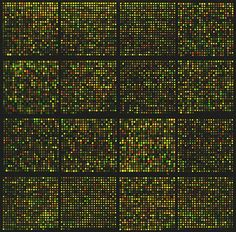 INDIA™: Polymer Microarray for Drug Screening