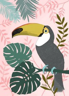 "Image of Affiche « Monsieur le Toucan rose"" Art Prints, Illustrations And Posters, Animal Art, Toucan Art, Illustration, Toucan Illustration, Animal Illustration, Bird Illustration, Bird Art"
