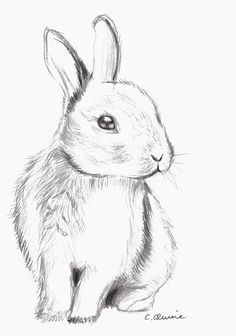 Drawing of a cute bunny. Used Derwent pencils. Fluffy Bunny by Christina Quine Cool Art Drawings, Pencil Art Drawings, Art Drawings Sketches, Art Sketches, Drawing Ideas, Drawing Tips, Cute Drawings Of Animals, How To Draw Animals, Drawing Animals