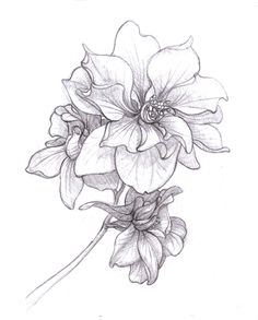 larkspur drawing July birth flower - Google Search