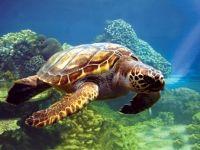 Georgia Aquarium Sea Ocean Pinterest Georgia