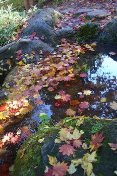 Litia Park, Ashland, Oregon 2013