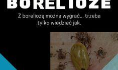 Odpowiedzialne za tą chorobę są kleszcze z rodzaju Ixodens ricinus występujące w Polsce. Kleszcze są nosicielami około 140 patogenów. Jednym z nich są organizmy z rodzaju Borrelia burgdorferi (krętki), które bytują i namnażają się w jelitach kleszczy. Co to ma wspólnego z tym jak wyleczyć boreliozę? Już Wam tłumaczę. Kiedy […]