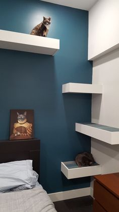 Cats Toys Ideas - I built some cat shelves - Ideal toys for small cats Mimi Chat, Cat Climbing Wall, Cat Gym, Ideal Toys, Cat Condo, Pet Furniture, Furniture Stores, Furniture Ideas, Furniture Movers