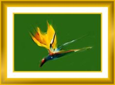 Bird of Paradise by Nikki Rinderer
