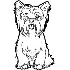 Just Coloring Pages: Yorkshire coloring pages Printable coloring sheets - Silky Terrier, Puppy Coloring Pages, Free Coloring Pages, Printable Coloring, Coloring Sheets, Yorkshire Terrier Dog, Dog Tricks, Inkscape Tutorials, Frida Art