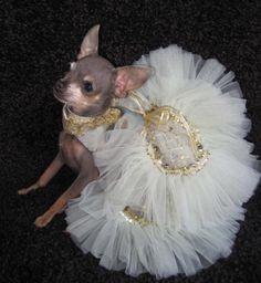 High Fashions - Dog Dresses, Pet Apparel, Designer Dresses