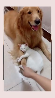 All About Animals, Animals And Pets, Baby Animals, Funny Animals, Cute Animals, Cute Funny Baby Videos, Cute Funny Babies, Funny Animal Videos, Cute Cats And Dogs