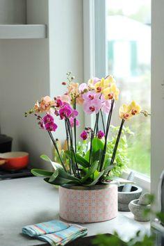 nookandsea-orchid-flowers-vase-purple-yellow-pink-orange-counter-kitchen-house.jpg 560×841 pixels