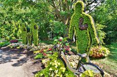 https://flic.kr/p/gJ3YZP   Alternanthera topiary (2)