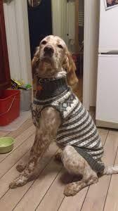 Bilderesultat for bichon frise marius genser Bichon Frise, Needlework, Knitting, Dogs, Animals, Patterns, Doggies, Embroidery, Block Prints