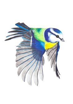 Blue Tit In Flight Print by ByKellyAttenborough on Etsy