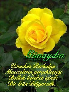 Çiçekli Günaydın Resimleri Ve Günaydın Sözleri | Ozledim.Net Islamic Images, Messages, Rose, Flowers, Plants, Relax, Instagram, Amigurumi, Education