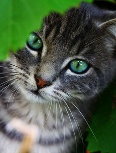 Found... Beautiful Unique Cat Names #pin