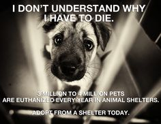 Please adopt a shelter dog!