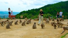 http://www.expedia.co.nz/Arashiyama-Monkey-Park-Kyoto.d6160752.Attraction