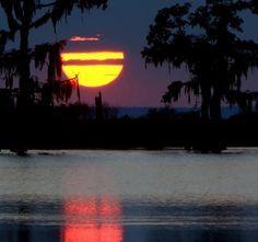 Fishing the Louisiana Bayous art - Google Search