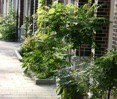 geveltuin Wall Gardens, Facade, Small Spaces, City, Plants, Balcony, Facades, Cities, Plant