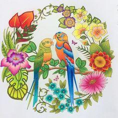 Johanna Basford Coloring Pages Colouring Prismacolor Parrots Color Schemes Printable Books