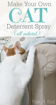Cat Care Homemade Cat Deterrent Spray - Stop The Scratching and Accidents - I tried this new cat deterrent spray recipe made with lemon and eucalyptic essential oils, and it is working! The cats aren't scratching my couch or urinating on our carpet. Diy Cat Toys, Homemade Cat Toys, Crazy Cats, I Love Cats, Dog Deterrent Spray, Diy Jouet Pour Chat, Gatos Cat, Cat Hacks, My Bebe