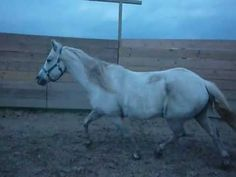 My horse Stone...first full day I had him...he wanted nothing to do with me. Wow we have come a long way!