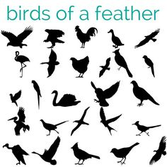 free dingbat fonts -birds for this one
