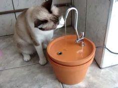 Bebedouro para gatos