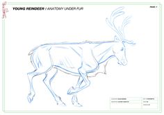 Creature Design, Various Artists, Reindeer, Moose Art, Character Design, Creatures, Sketches, Animal Illustrations, Artwork
