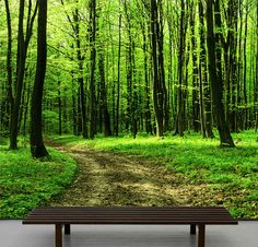 Walk in the forest wallpaper, repositionable peel & stick wall paper, wall covering :: Paper the inside of the closet with something like this.