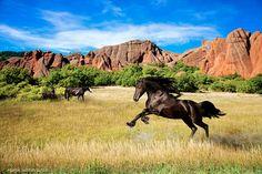 https://flic.kr/p/j7E6FP   Wild Horses  #beautiful #american #nature #horses #Colorado #landscape #photography