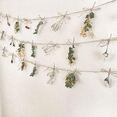 再販*ミモザ入荷 フラワーガーランド ドライフラワー Green Flowers, Diy Flowers, Strange Flowers, Star Flower, Seed Pods, When I Grow Up, Christmas Tree Toppers, Crafty Craft, Dorm Decorations