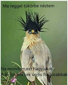 Naruto, Humor, Animals, Animales, Animaux, Humour, Funny Photos, Animal, Animais
