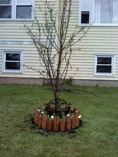 Cherry Tree planted in loving memory of my Mom. (2012)