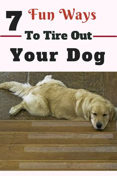 It's important to try to tire out your dog physically, but remember that dogs have creative, active minds that need stimulation as well. 7 Fun Ways to Tire Out Your Dog. ways to tire out your puppy. Training Your Puppy, Dog Training Tips, Therapy Dog Training, Training Videos, Tips And Tricks, Tricks For Dogs, Cool Dog Tricks, Dressage, Diy Pet