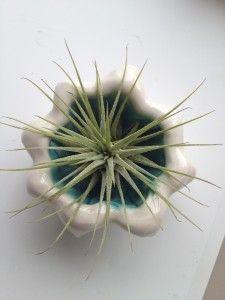 Page 2 – Paula Barry Ceramics Pinch Pots, Kind Words, Air Plants, Beautiful Words, Incense, Dandelion, Herbs, Clay, Ceramics