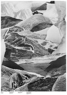 black white nature collage