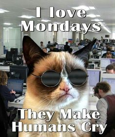 Grumpy Cat your right must humans hate Monday!
