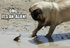 Funny Pug Dog Meme Pun LOL                                                                                                                                                                                 More