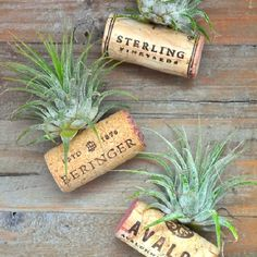 {How-To} Upcycle your wine corks into these cute little Air Plant Wine Cork Magnets! Perfect for dressing up a medicine cabinet or fridge.